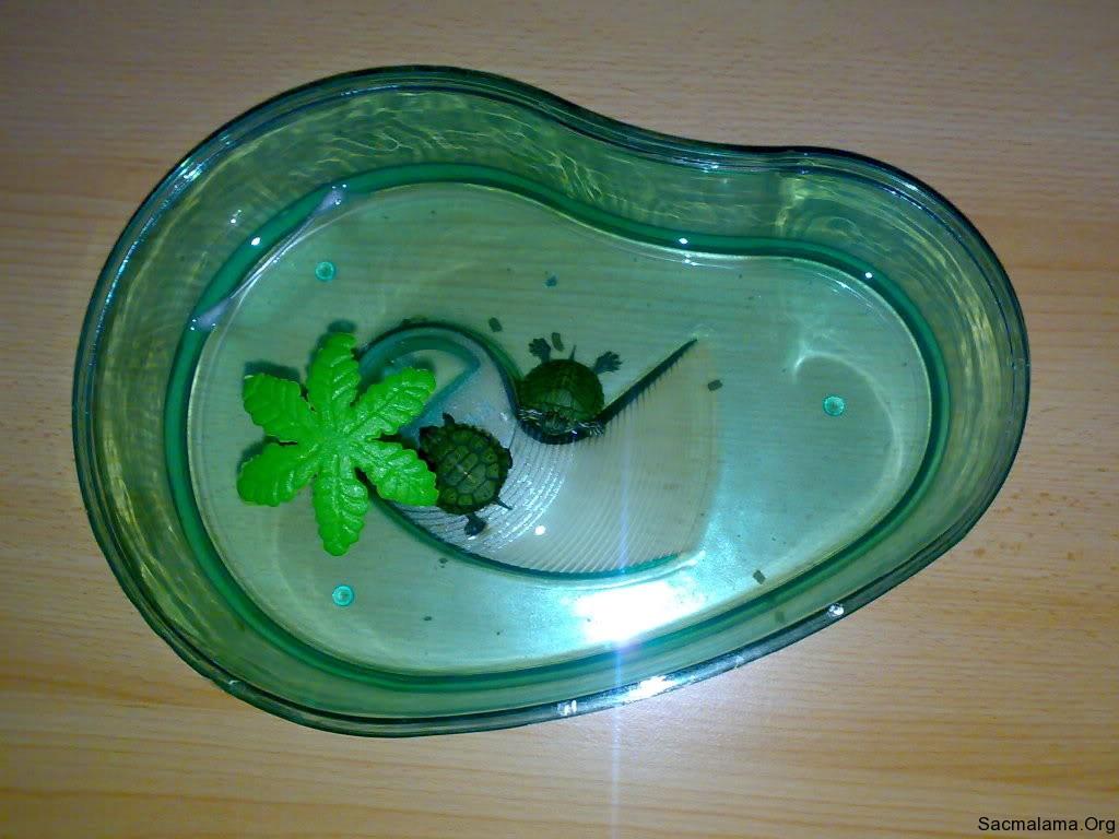 ölüm kabı fanusu kaplumbağa plastik kabı