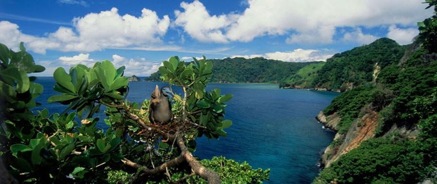 Cocos-Adasi-Kosta-Rika