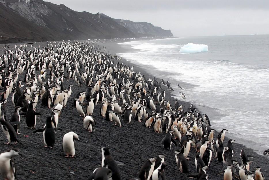 Deception-Adasıi-Antarktika-2