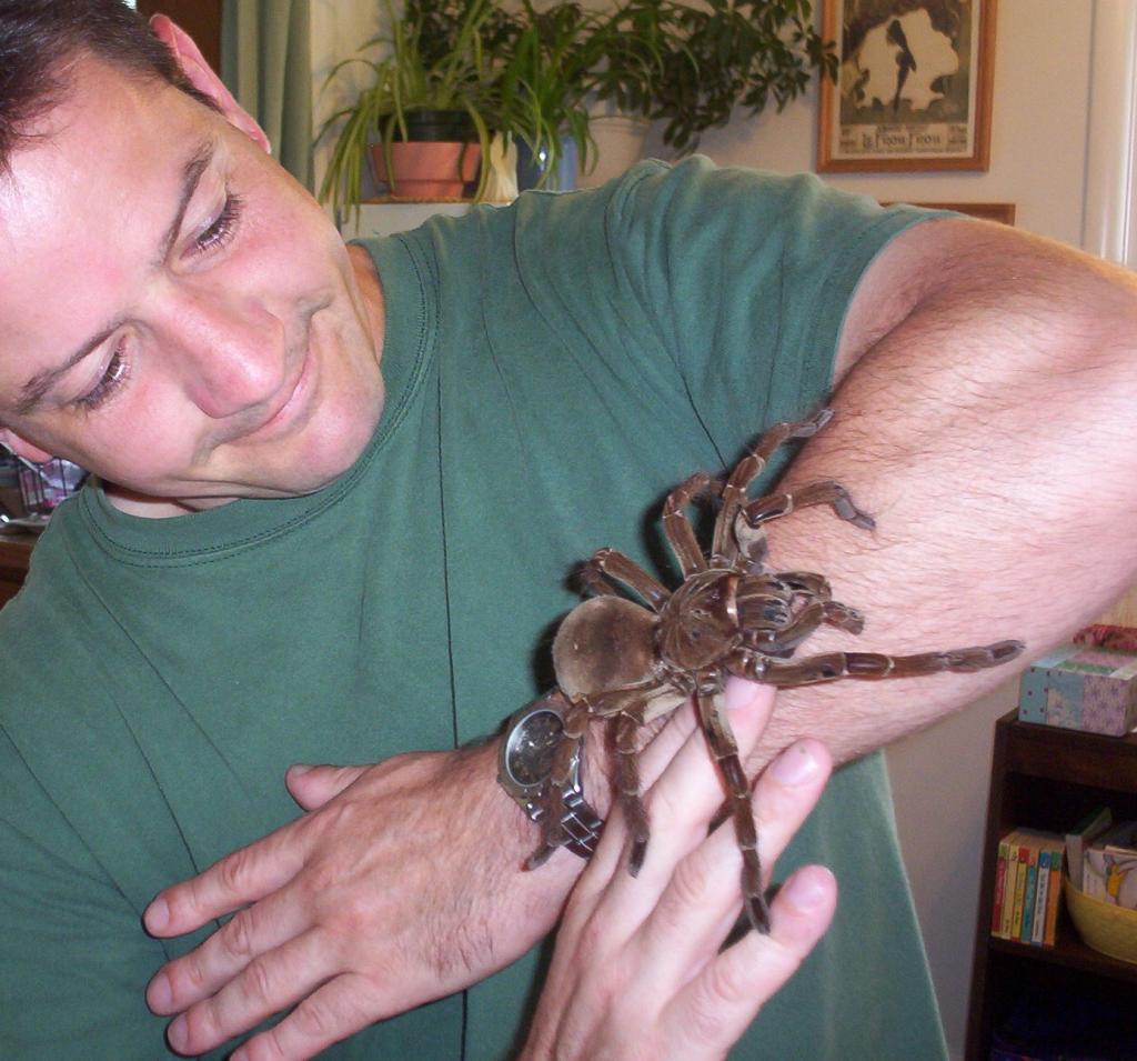 Goliath-birdeater-spider-dunyanin-en-buyuk-orumcekleri