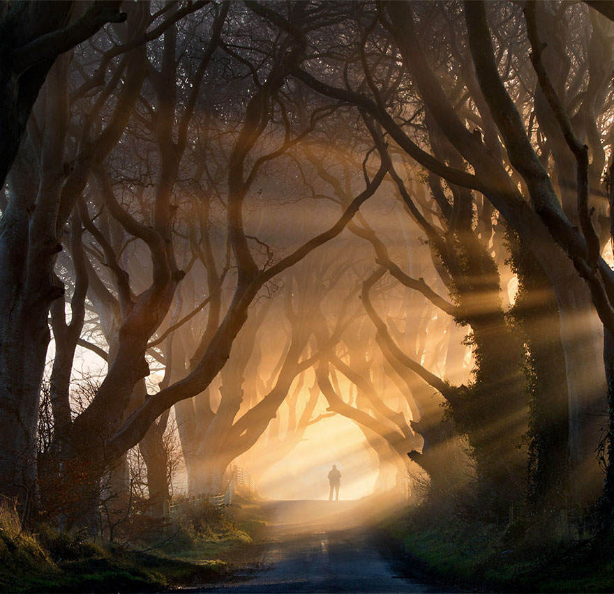 The-Dark-Hedges-kuzey-irlanda-1
