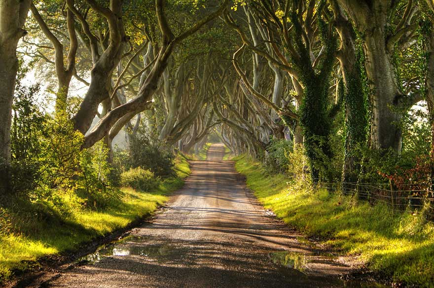The-Dark-Hedges-kuzey-irlanda-2