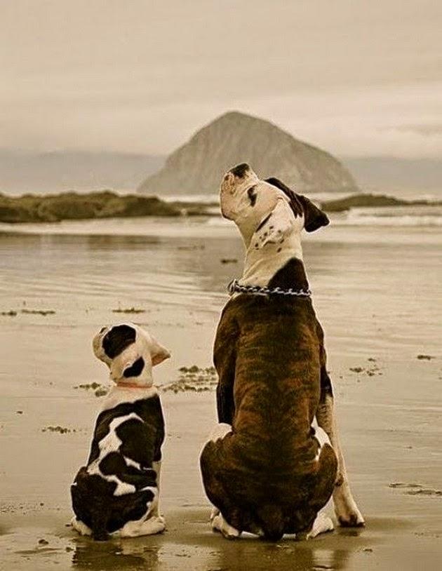 En tatli sevimli hayvan resimleri fotograflari3