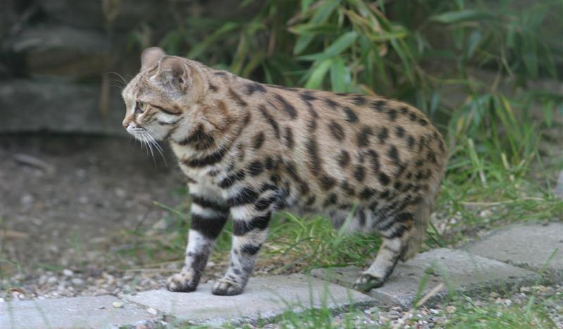 kediler-hakkinda-bilinmeyen-10-ilginc-sey2