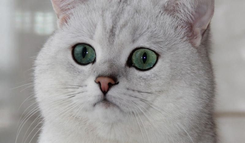 kediler-hakkinda-bilinmeyen-10-ilginc-sey3
