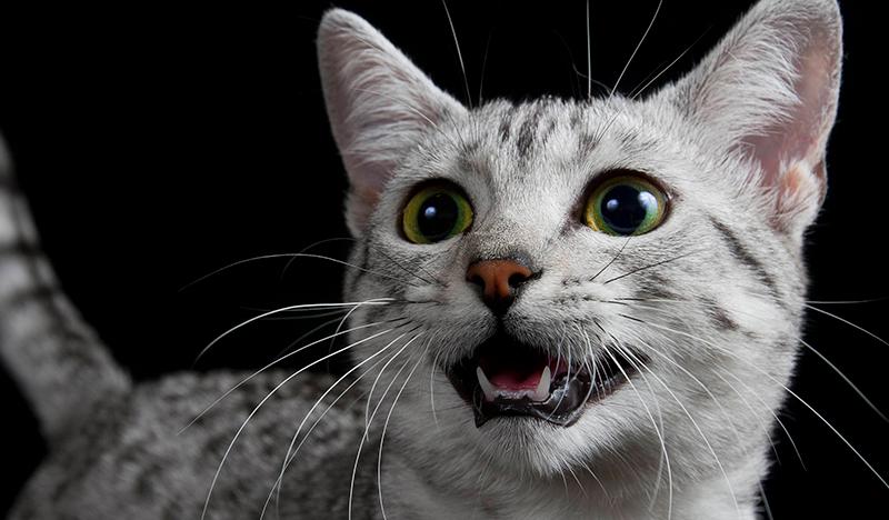 kediler-hakkinda-bilinmeyen-10-ilginc-sey5