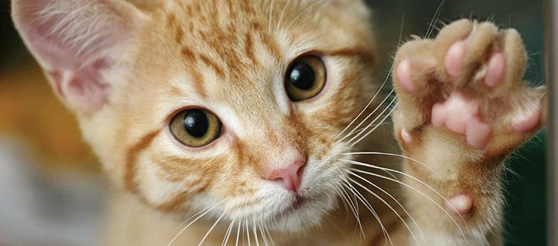 kediler-hakkinda-bilinmeyen-10-ilginc-sey7