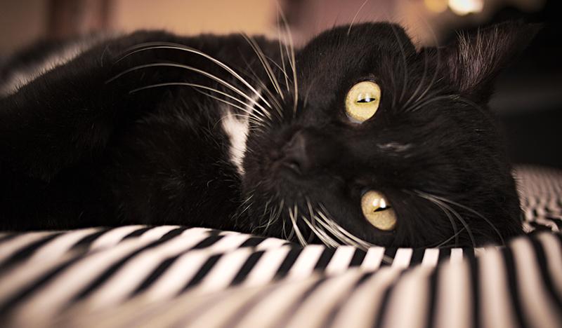kediler-hakkinda-bilinmeyen-10-ilginc-sey9